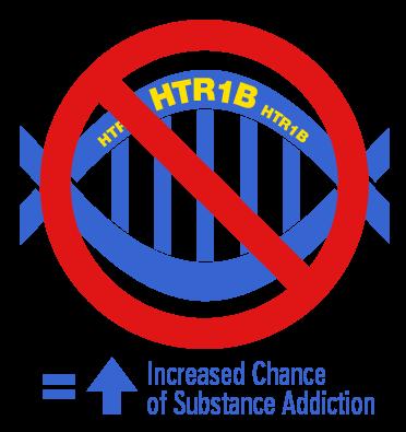 HTR1B