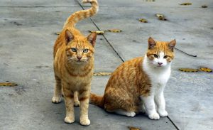 two cats sitting on the pavement